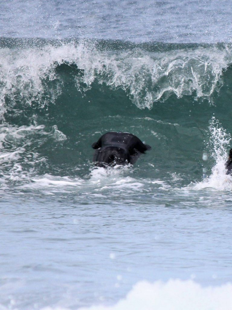 Man duck diving under the wave